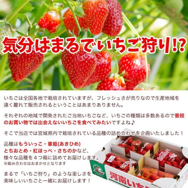 たっぷり約1kg!宮城県産いちご4品種食べ比べセット(大粒/レギュラーパック)冷蔵|otr-ishinomaki|03