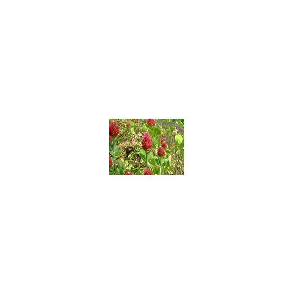 29年産 特別栽培米 島根おおち産 石見高原ハーブ米 きぬむすめ 精米 1kg|owarinokomegura|05