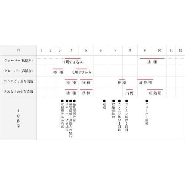 29年産 特別栽培米 島根おおち産 石見高原ハーブ米 きぬむすめ 精米 1kg|owarinokomegura|06