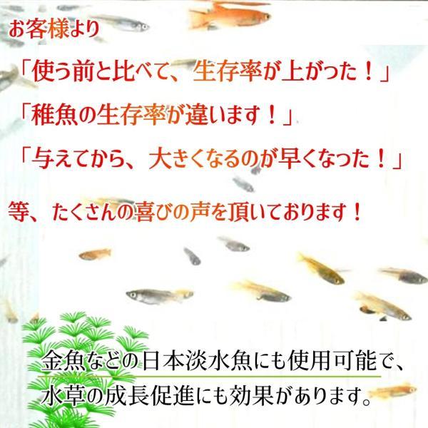 (メダカ生体購入者限定) めだか稚魚のためのウォーター・フード 50ml p-and-f 07