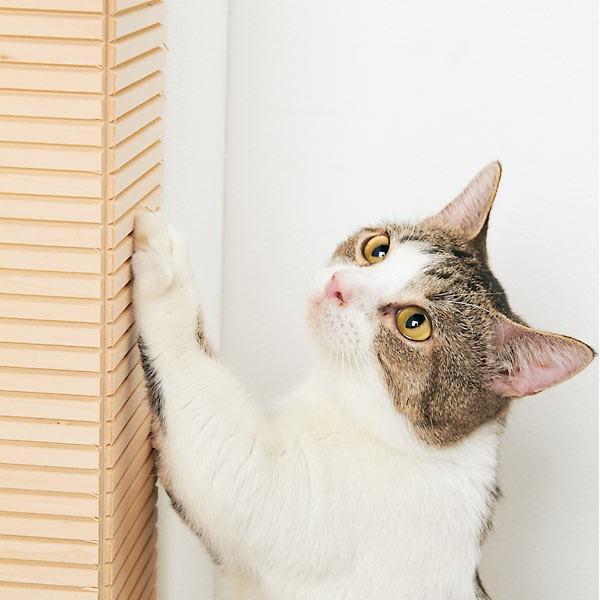 壁に貼れる爪とぎボード 3枚 爪とぎ スクラッチ キズ隠し 壁 猫 猫用品 猫用 ペットグッズ 国産 日本産|peppynet|02