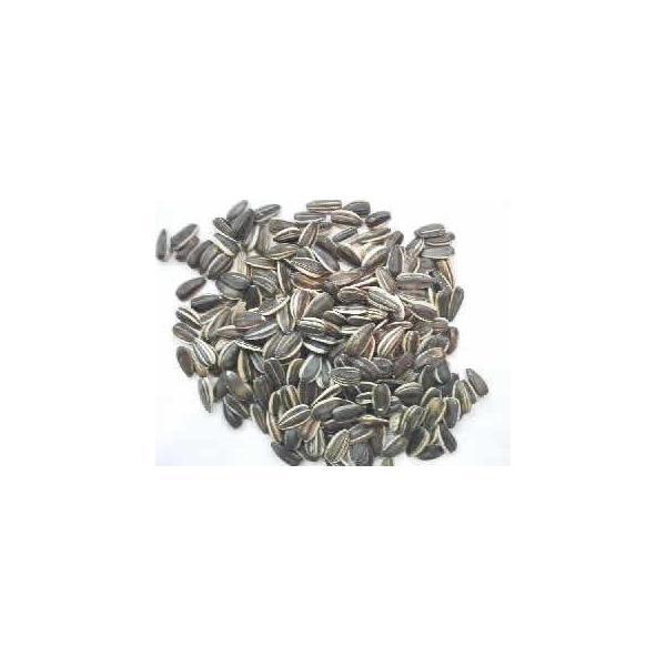 北米USA産 ひまわりの実 5kg × 2(10kg) 【脱酸素防虫剤入り袋】 インコ オウム 小動物