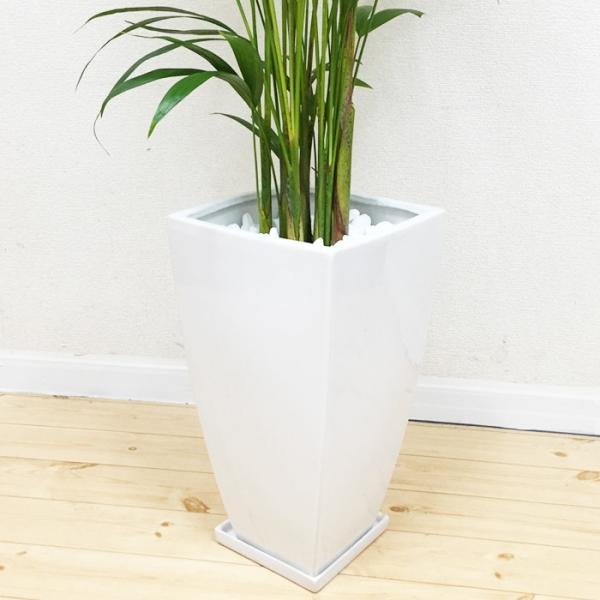 アレカヤシ 陶器鉢 角型 観葉植物 ヤシの木 ヤシ 送料無料|pg869|06