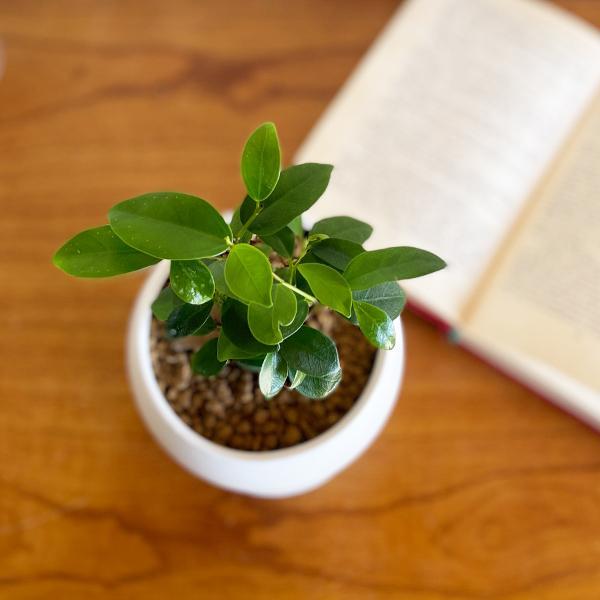 机に置くとイイ感じの「デスクトップ植物」まとめ