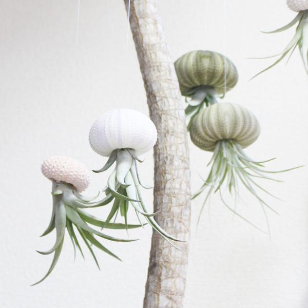 ジェリーフィッシュ エアプランツ ウニの骨 ワイヤー付 吊り下げ ハンギング チランジア airplants 観葉植物 インテリア|pg869|02