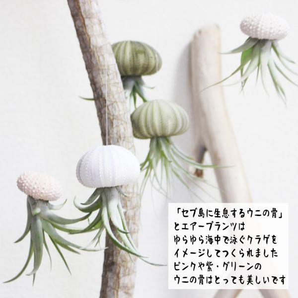 ジェリーフィッシュ エアプランツ ウニの骨 ワイヤー付 吊り下げ ハンギング チランジア airplants 観葉植物 インテリア|pg869|03