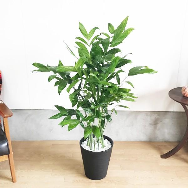 高性チャメドレア ヤシの木 観葉植物 ブラックセラアート鉢 送料無料|pg869|03