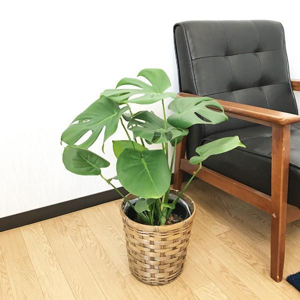 モンステラ 鉢カバー付  観葉植物 送料無料 中型|pg869|02