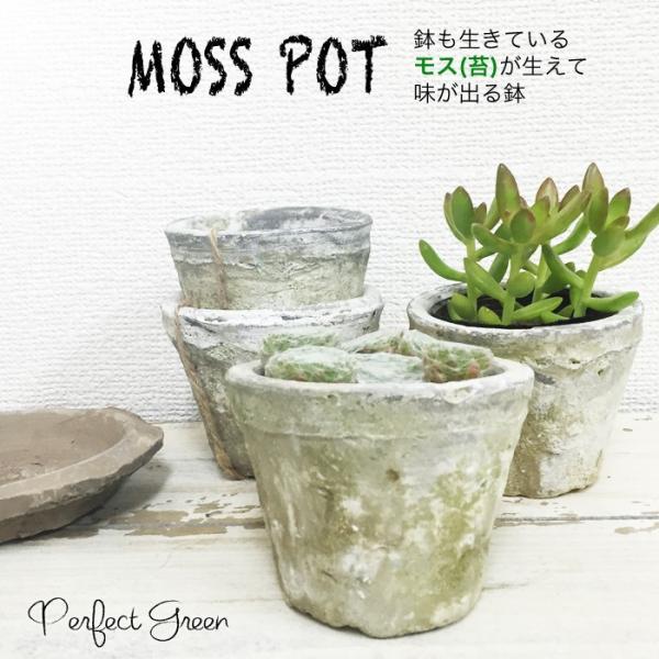 モスポット ホワイト3鉢 植木鉢 陶器鉢 テラコッタ鉢 素焼き鉢 鉢底穴アキ プランター おしゃれな植木鉢 mossポット 送料無料