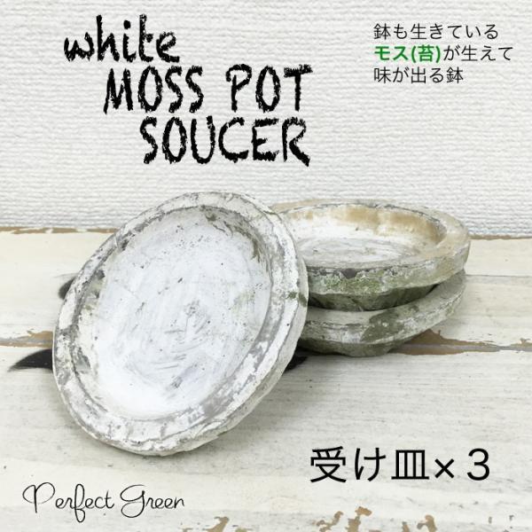 モスポット 受け皿 ホワイト 3個 植木鉢 陶器鉢 ソーサー 白色 白 テラコッタ鉢 素焼き鉢 プランター おしゃれな植木鉢 mossポット 送料無料