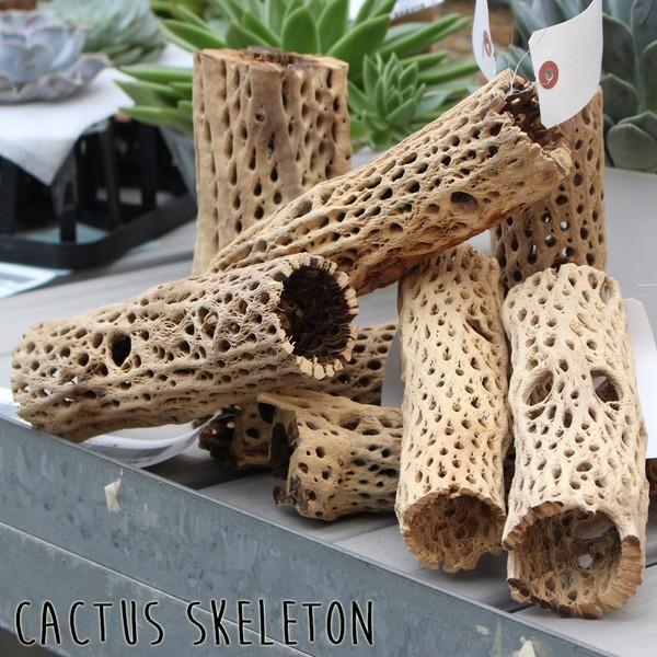 サボテンの骨 スケルトンツリー カクタススケルトン アクアリウム テラリウム 水槽 爬虫類 観葉植物 インテリア 即日出荷|pg869|04