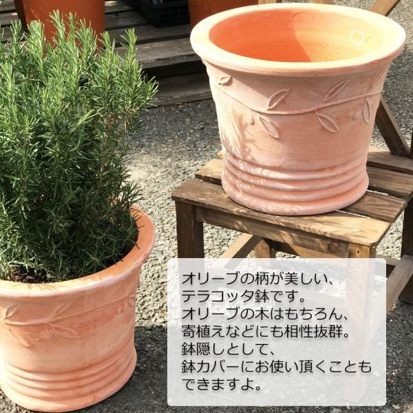 テラコッタ 植木鉢 中型 素焼き鉢 アンティーク 販売 おしゃれ 即日出荷 送料無料|pg869|03