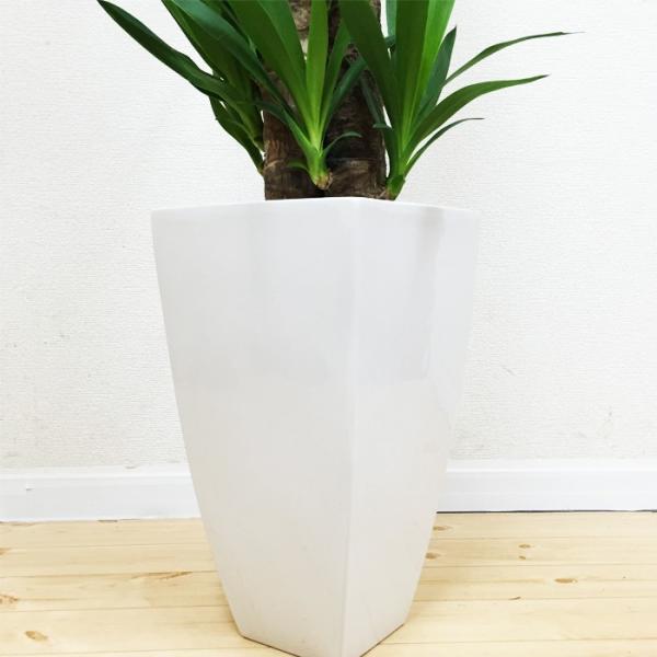ユッカ 青年の樹 陶器鉢 角型 観葉植物 青年の木 送料無料|pg869|06