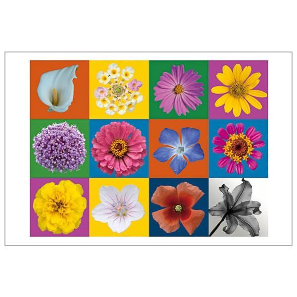 色々お花のポストカード|photoroom-g