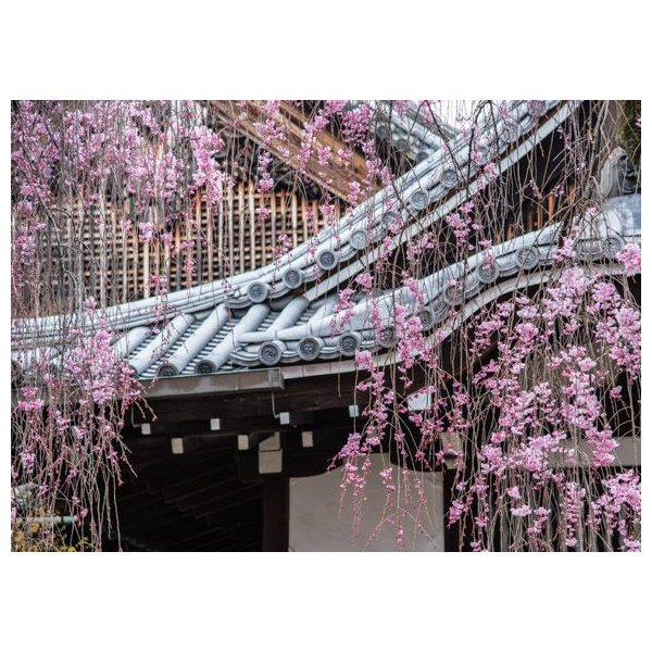 枝垂れ桜・京都ポストカード|photoroom-g