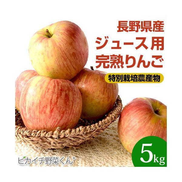 樹上完熟なので甘みが違う!「長野県産」りんご 5Kg(りんご 訳あり)(特別栽培農産物)|pika831