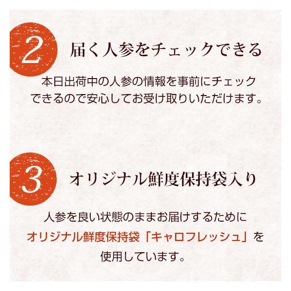 (最大26倍)無農薬にんじん ジュース用 10Kg 人参 ニンジン 国産 送料無料 訳あり|pika831|13