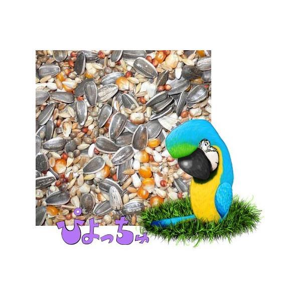 オウム用ブレンド 500g×2|piyocyu-ash