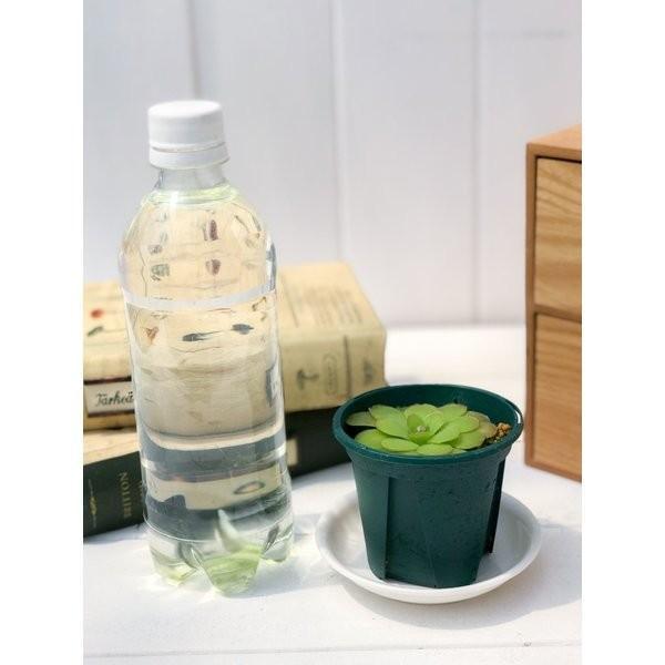 食虫植物 ムシトリスミレ ピンギキュラ 朧月 2.5号鉢 Pinguicula planchu 03