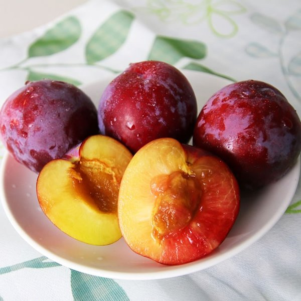 山梨県産 すもも (プラム) サンタローザ 2kg箱 24〜28玉前後|plumfarm|05