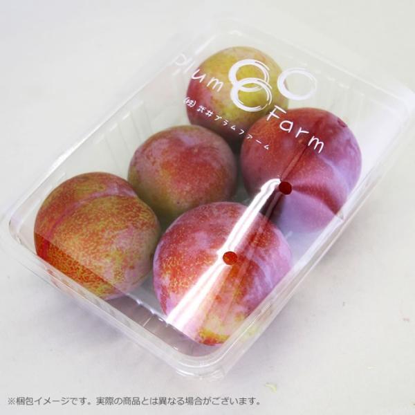山梨県産 すもも サマーエンジェル 2kg箱 24〜28玉前後 plumfarm 03