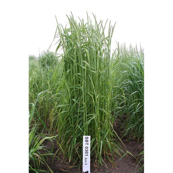 種 5kg チモシー ユウセイ 極早生 畑地 牧草 緑肥 [播種期:4〜10月] 雪印種苗 米S 代引不可