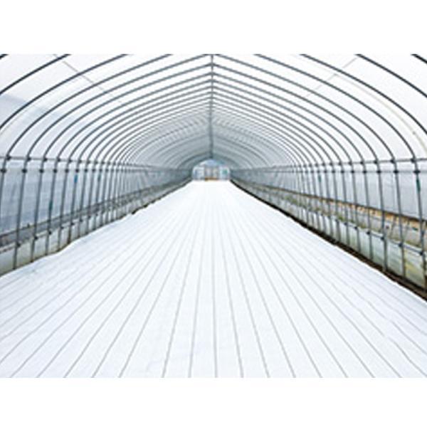 防草シート ホワイト グランドシート アルファ オフホワイト 0.5x100m 遮光率99% 白 反射 太陽光発電 農業 果樹園 トマト イチゴ ダイオ化成 タ種 代引不可