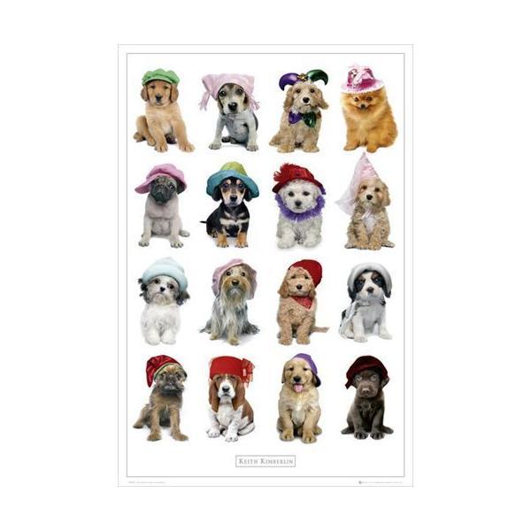 キース・キンバーリン ドッグ ポスター Keith Kimberlin Hats Dogs