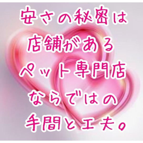 猫首輪 ライトパープル 鈴無 キャティーマン ミーチェ チャーム 送料無料 ポイント消化|premium-asuka|04