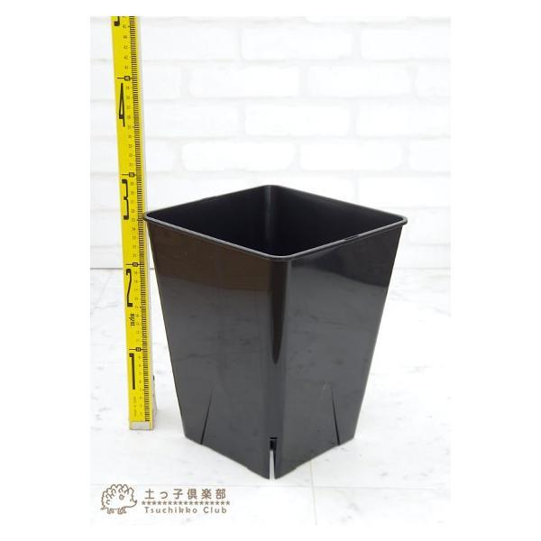 のびのび育つ 『 スリット鉢 スクエア 』 8号角型|produce87|03