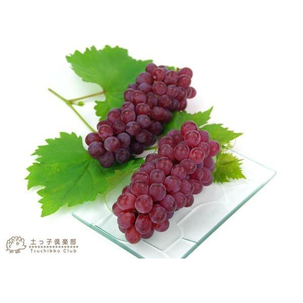 実付き ブドウ 『 デラウェア 』 6号鉢植え【期間限定】|produce87|04