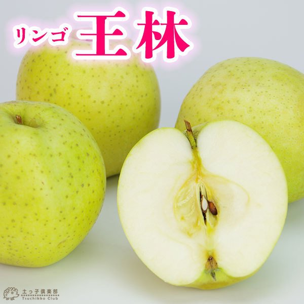 りんご 『 王林 (おうりん) 』 15cmポット苗 ( 黄リンゴ )