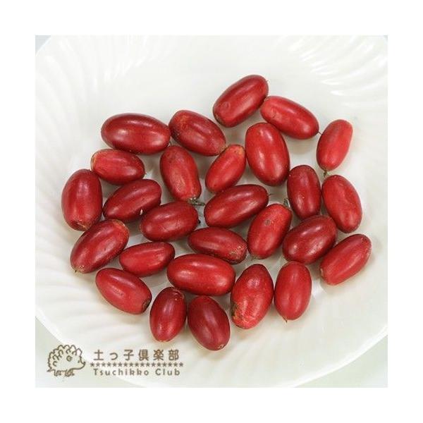 ミラクルフルーツ(ミラクルベリー) 17cm鉢植え produce87 03