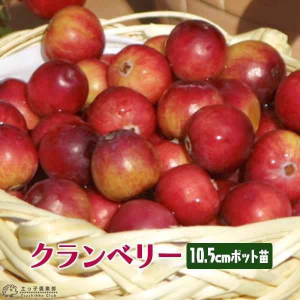 実付き クランベリー ( ツルコケモモ ) 10.5cmポット苗|produce87