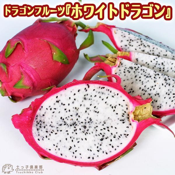 ドラゴンフルーツ ホワイトドラゴン 9cmポット苗|produce87