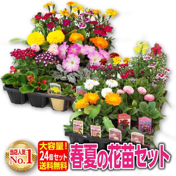 春夏の花苗 24個セット 送料無料|produce87