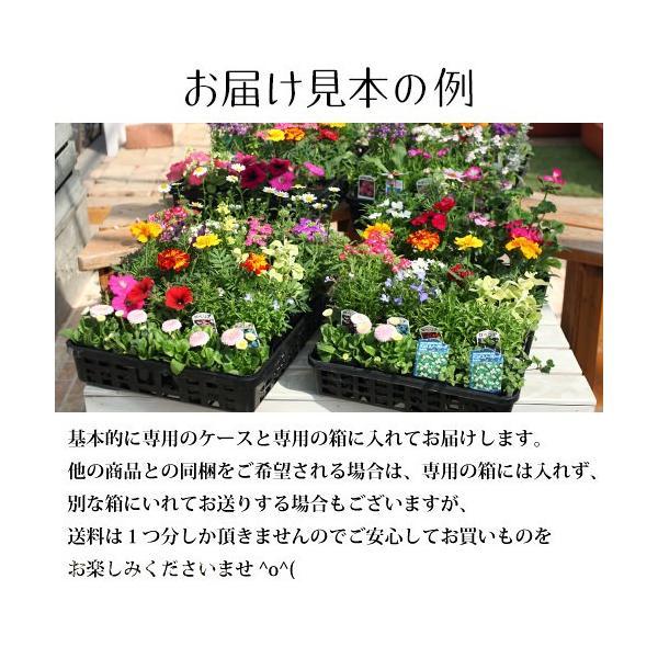 春夏の花苗 24個セット 送料無料|produce87|02