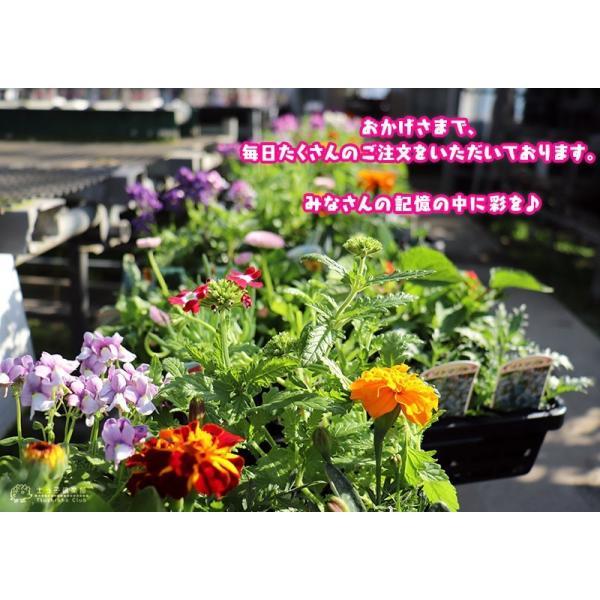 春夏の花苗 24個セット ( 送料無料 ) produce87 13