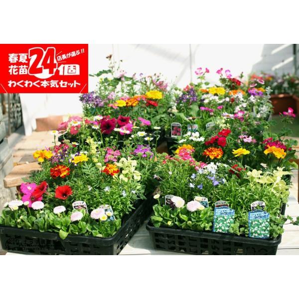 春夏の花苗 24個セット 送料無料|produce87|06
