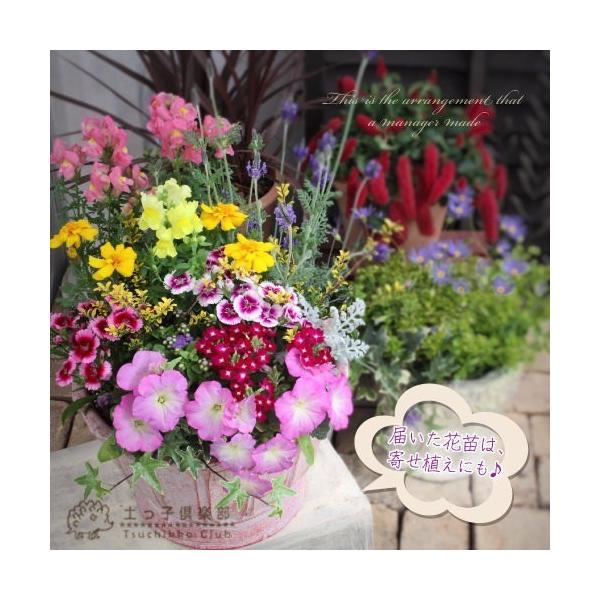春夏の花苗 24個セット 送料無料|produce87|07