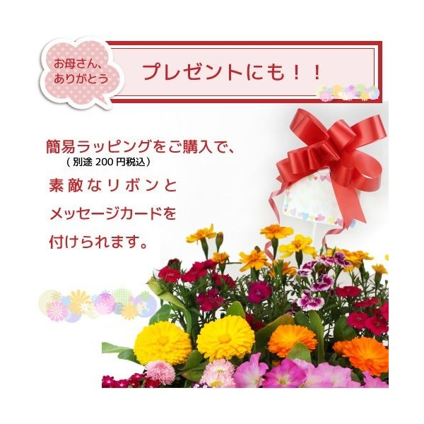 春夏の花苗 24個セット 送料無料|produce87|09
