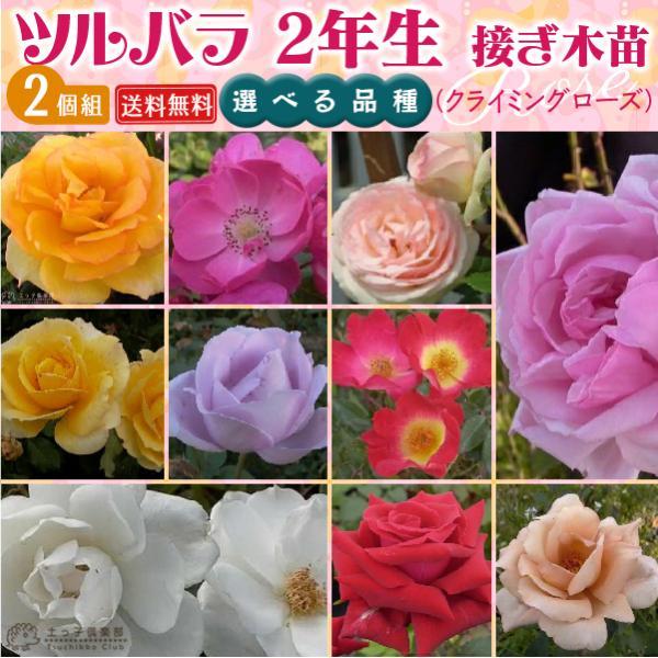 ツルバラ 選べる品種 2個セット 送料無料 薔薇 2年生接 ぎ木苗 ( クライミングローズ )|produce87