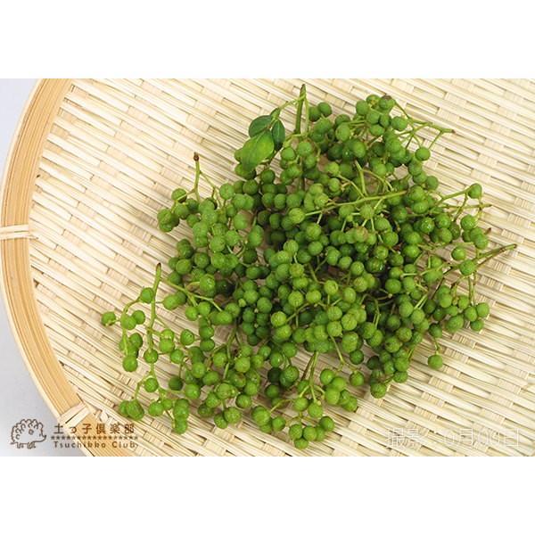 山椒 『 朝倉サンショウ 』 10.5cmポット接木苗|produce87|03