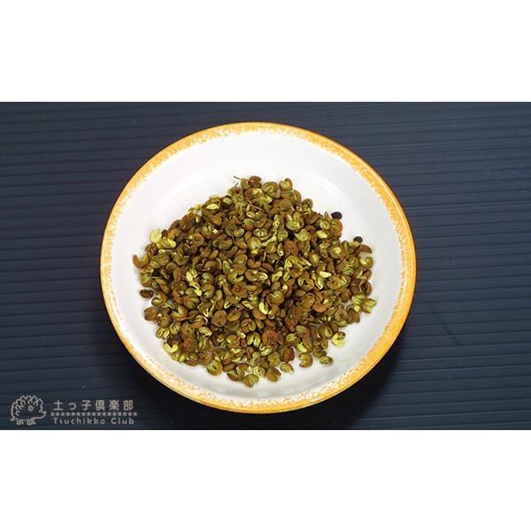 山椒 『 朝倉サンショウ 』 10.5cmポット接木苗|produce87|06