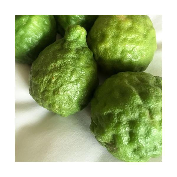 ハーブ柑橘 『 カフィアライム 』 こぶみかん  9cmポット苗 produce87 04
