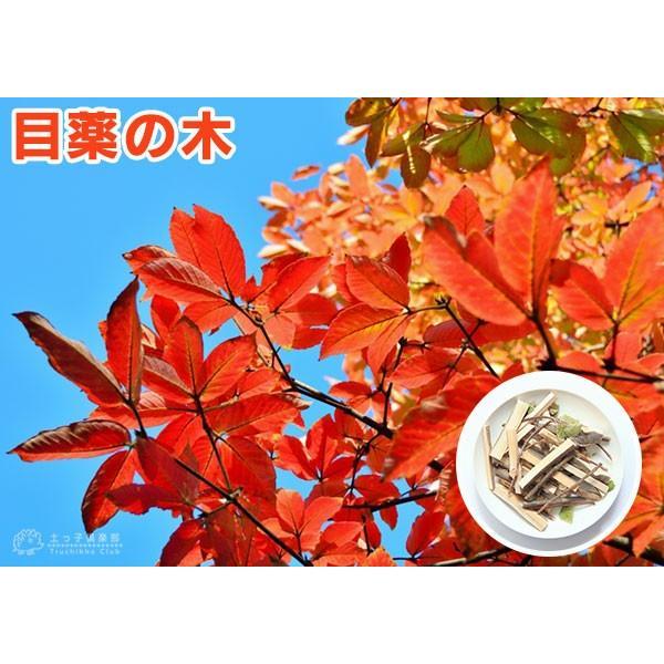目薬の木 ( メグスリノキ ) 13.5cmポット 苗木 produce87 04