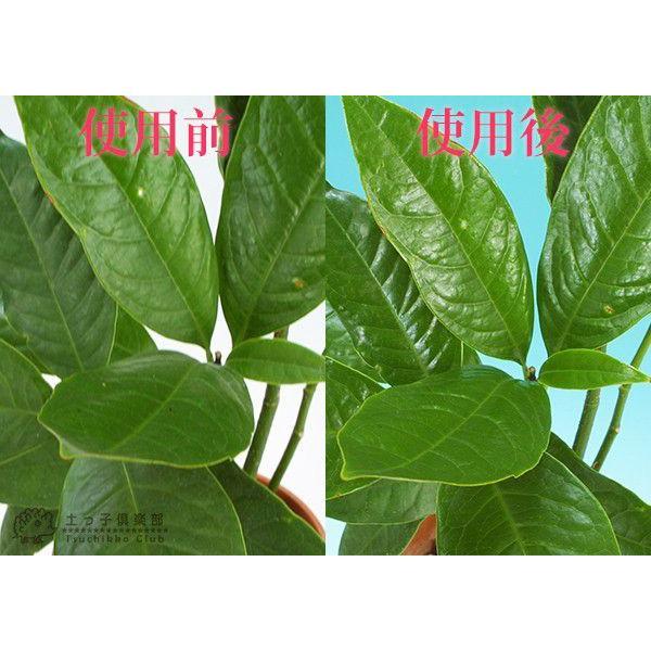 葉面洗浄剤 『 リーフクリン 』 220ml|produce87|02