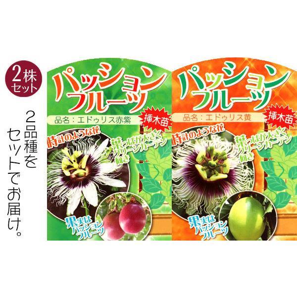 パッションフルーツ 『 くだもの時計草 』 10.5cmポット苗 2個組|produce87|04