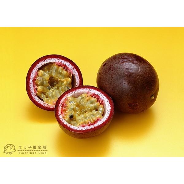 パッションフルーツ 『 くだもの時計草 』 10.5cmポット苗 2個組|produce87|08