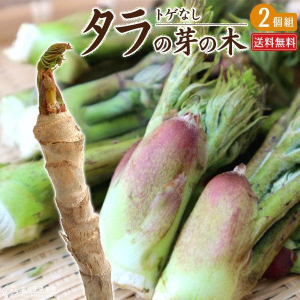 トゲなし「タラの芽の木」12cm(4号)ポット 2個セット 送料無料|produce87